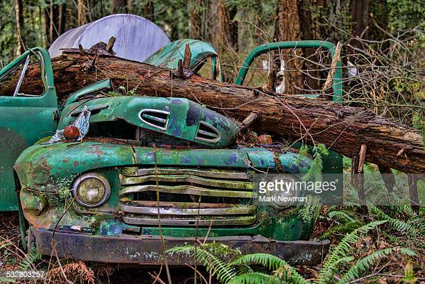 Tree crashed on old truck