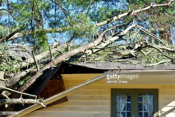 Tree Damages Roof of House