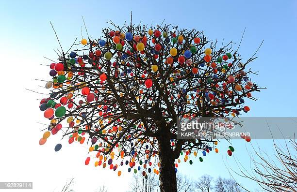 A tree decorated with colorful plastic Easter eggs is seen on February 28 2013 in GarmischPartenkirchen Germany AFP PHOTO / KARLJOSEF HILDENBRAND...