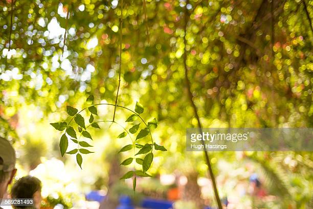 tree detail in moroccan garden - hugh hastings stock pictures, royalty-free photos & images