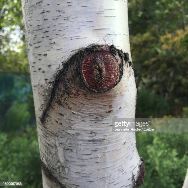tree eye in new york - baum stock pictures, royalty-free photos & images