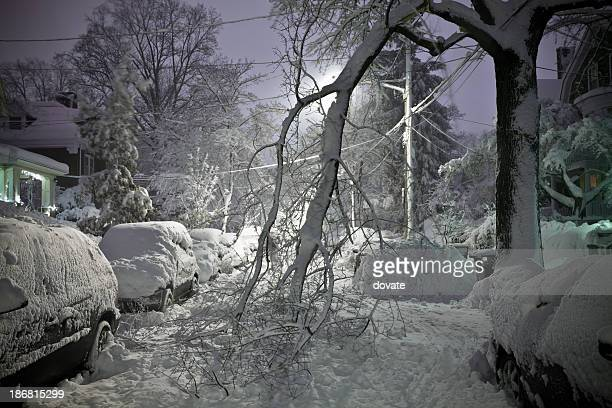 Tree Fallen in Street With Snow