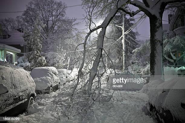 Albero caduto in strada con neve