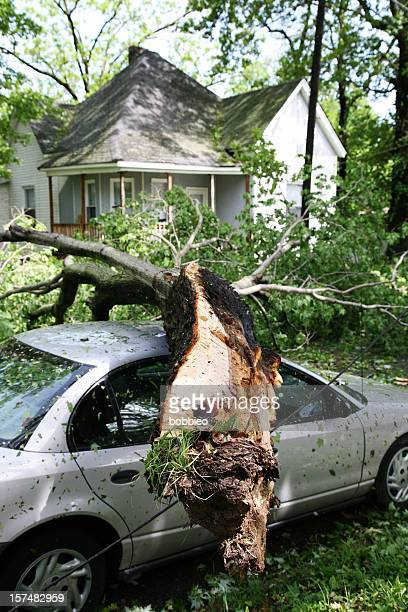 A tree fallen on the roof of a car in front of a house