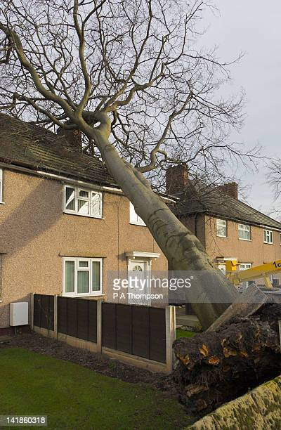 Tree falling on house, Wirral, England
