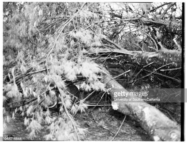 Tree falls on auto 15 March 1952 Frank Wyckoff 26334 Athena Avenue Supplementary material reads 'Chernus Harbor Captions Two negatives show huge pine...