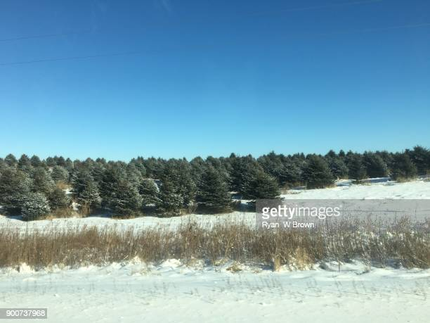 tree farm, christmas tree farm - christmas tree farm stock pictures, royalty-free photos & images