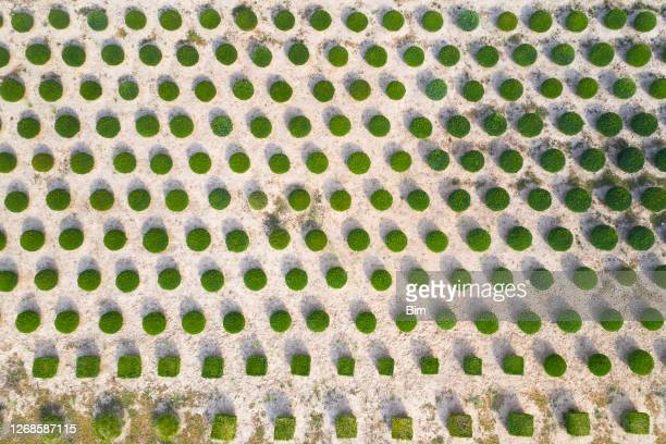 tree farm from above - tree farm stock pictures, royalty-free photos & images