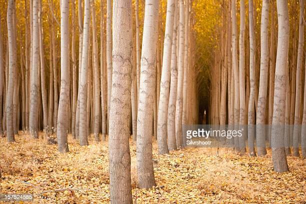 Tree farm in the fall