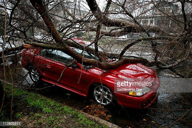 A tree fell on a parked car in Sacramento California Friday January 4 2008 Northern California was under siege today as an Arctic storm unleashed...