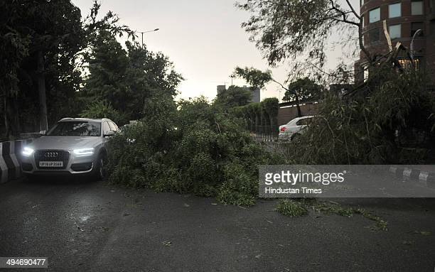 Tree fell on road due to massive thunder storm on May 30 2014 in Noida India At least nine people were killed in the NCR region including six in...