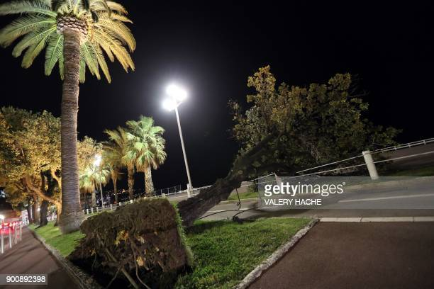 A tree fell on the 'Promenade des Anglais' during the Eleanor storm on the French riviera city of Nice on January 3 2018 Winter storm Eleanor sweeps...