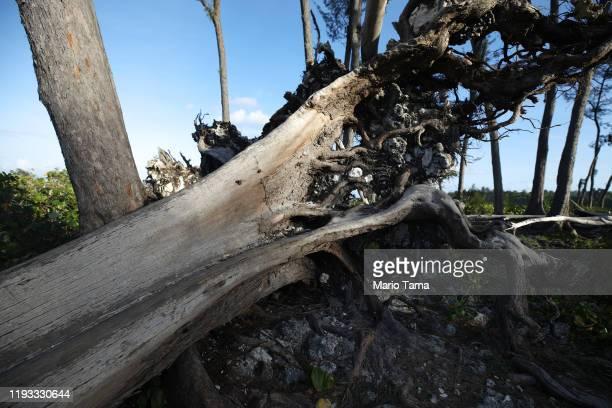 Tree felled by Cyclone Pam remains near Eton Beach on November 30, 2019 in Efate, Vanuatu. 25 percent of Vanuatu's 276,000 citizens lost their homes...