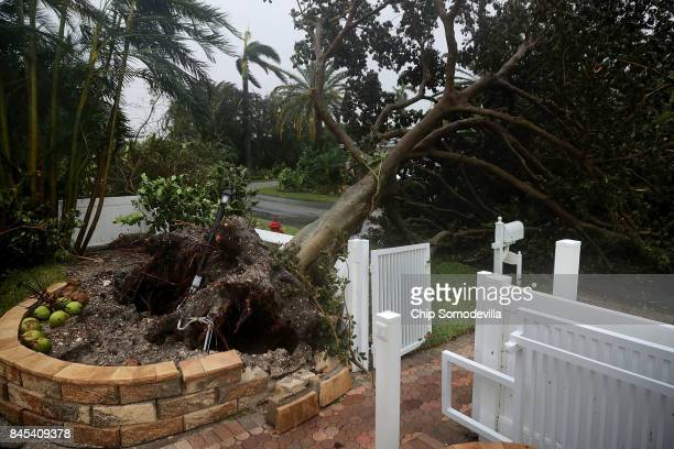 A tree felled by tropical storm winds blocks a street as Hurricane Irma hits the southern part of the state September 10 2017 in Pompano Beach...