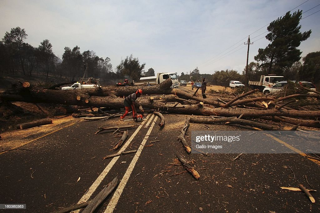 Tree fellers clear a tree that collasped onto the R301 road after it was burnt on January 29, 2013, in Paarl, South Africa. No firemen were present as the veld fire swept through the entire Boland region in the Western Cape.