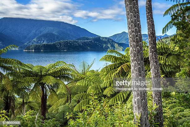 tree ferns in the marlborough sounds, new zealand - marlborough new zealand stock pictures, royalty-free photos & images