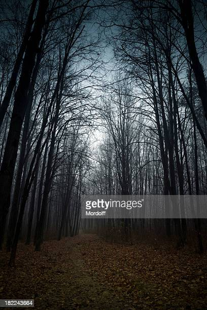 Tree Forest with Fog