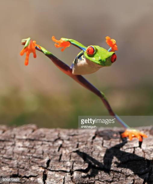 tree frog jumping, indonesia - leap day stock pictures, royalty-free photos & images