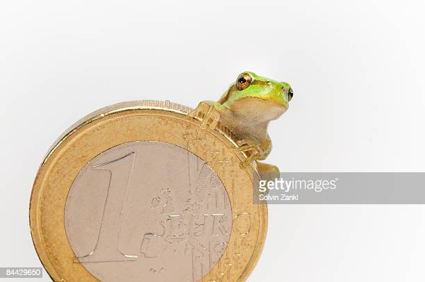 Tree frog (Hyla arborea) on Euro Currency