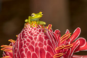 tree frog is any species frog