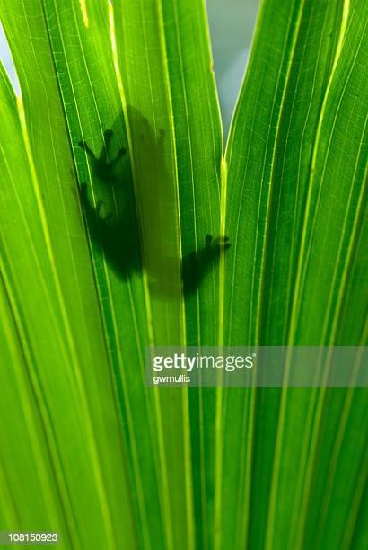Laubfrosch Umrisse durch Blätter