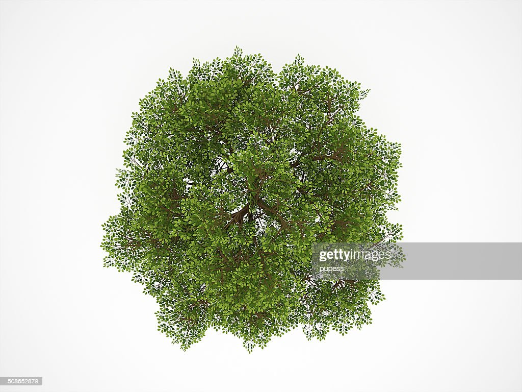 Tree from above isolated : Stock Photo