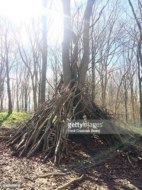 tree gazing  - heidi coppock beard - fotografias e filmes do acervo