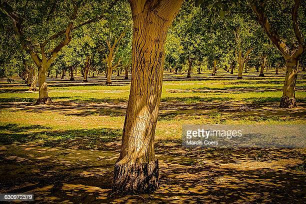 tree gazing  - grove stock photos and pictures