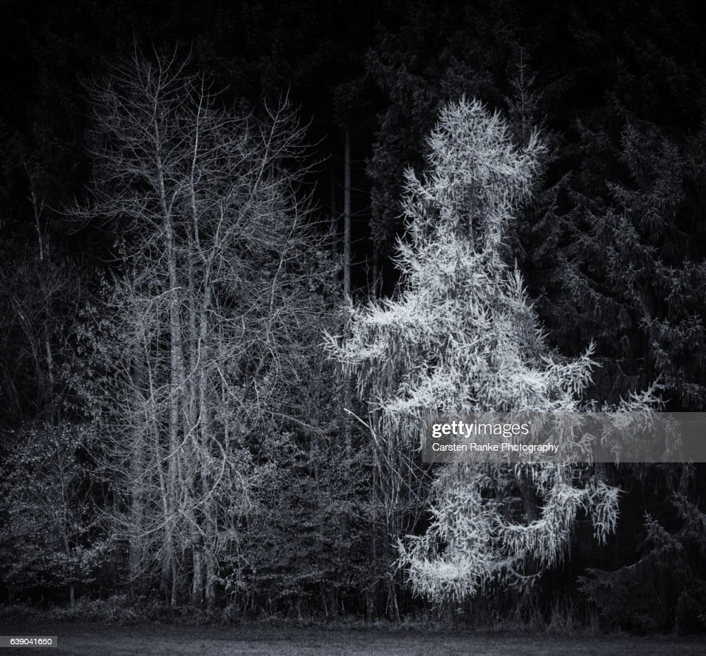 Tree Ghost : Stock-Foto