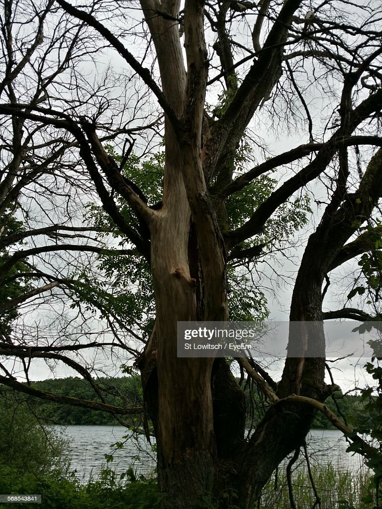 Tree Growing Against Lake : Stock Photo