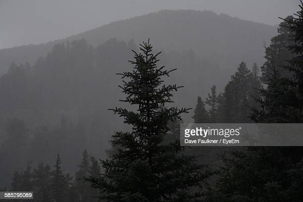 Tree Growing Against Mountain