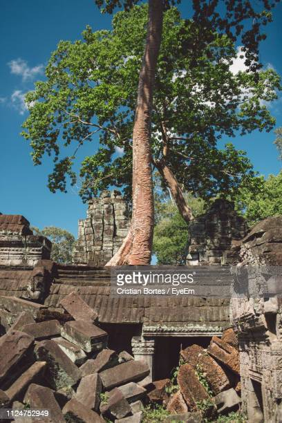 tree growing amidst old ruin in sunny day - bortes stock pictures, royalty-free photos & images