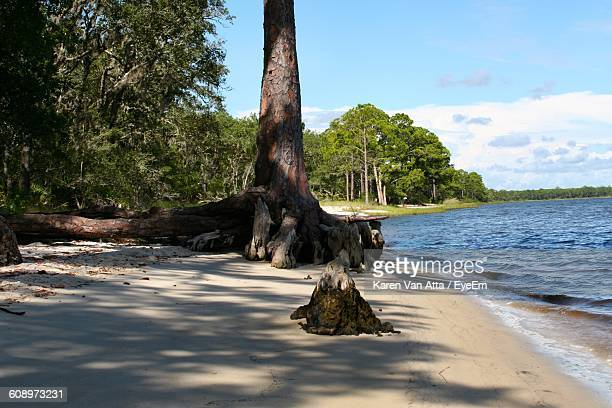 Tree Growing At Sea Shore