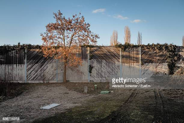 tree growing by fence against sky - albrecht schlotter stock photos and pictures