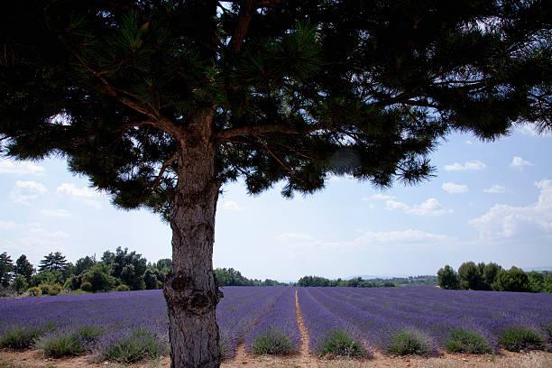 Tree Growing By Field Of Purple Flowers Wall Art