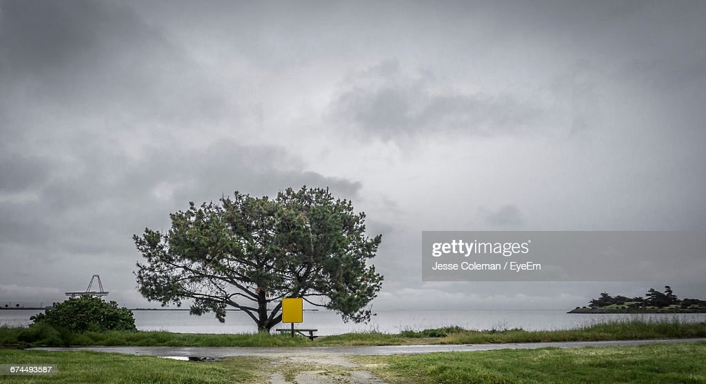 Tree Growing By Sea Against Sky : Stock Photo