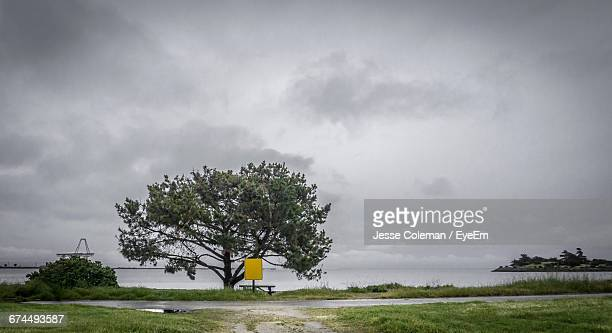 tree growing by sea against sky - jesse coleman imagens e fotografias de stock
