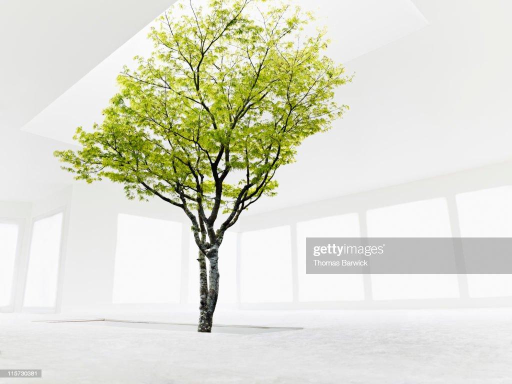 Tree growing from stairwell toward skylight : Stock Photo