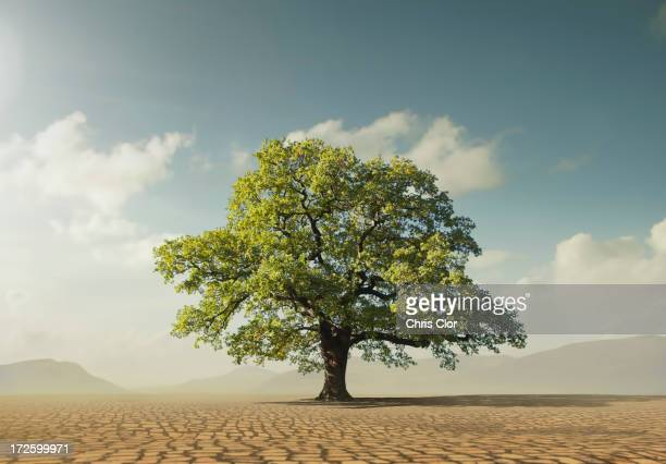 Tree growing in desert