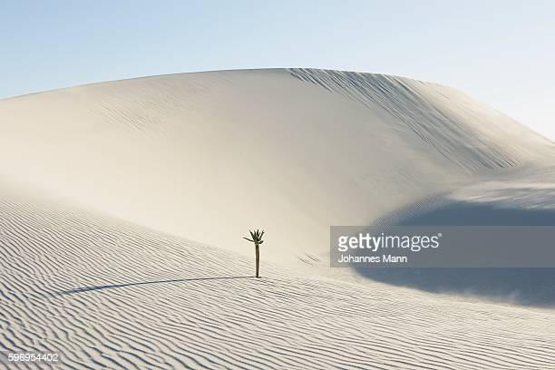 Tree Growing in Desert