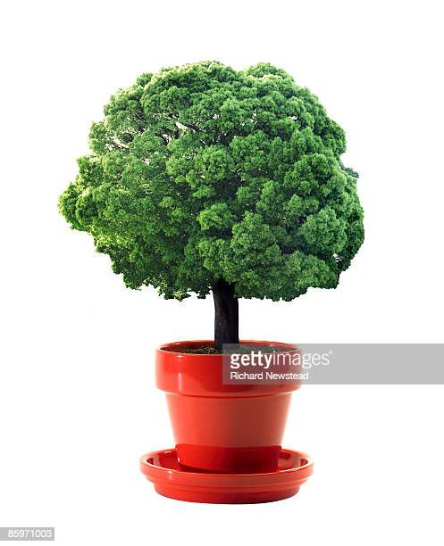 Tree growing in plant pot