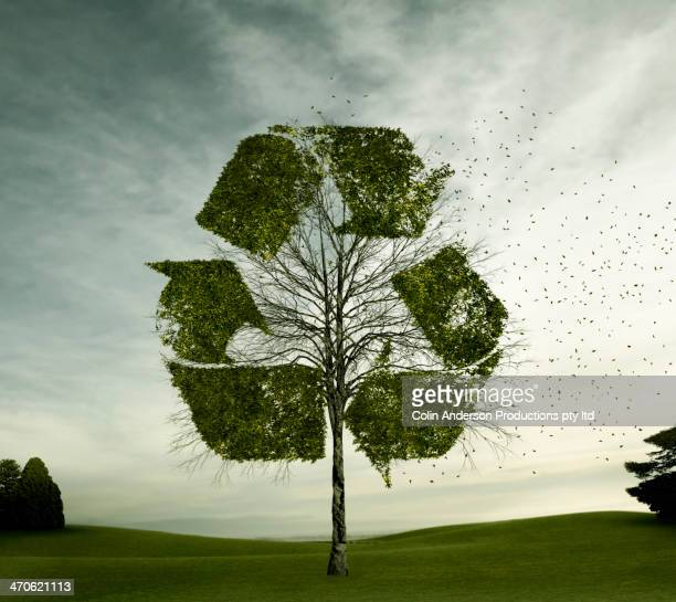 tree growing in recycling symbol shape - environmental issues stock pictures, royalty-free photos & images