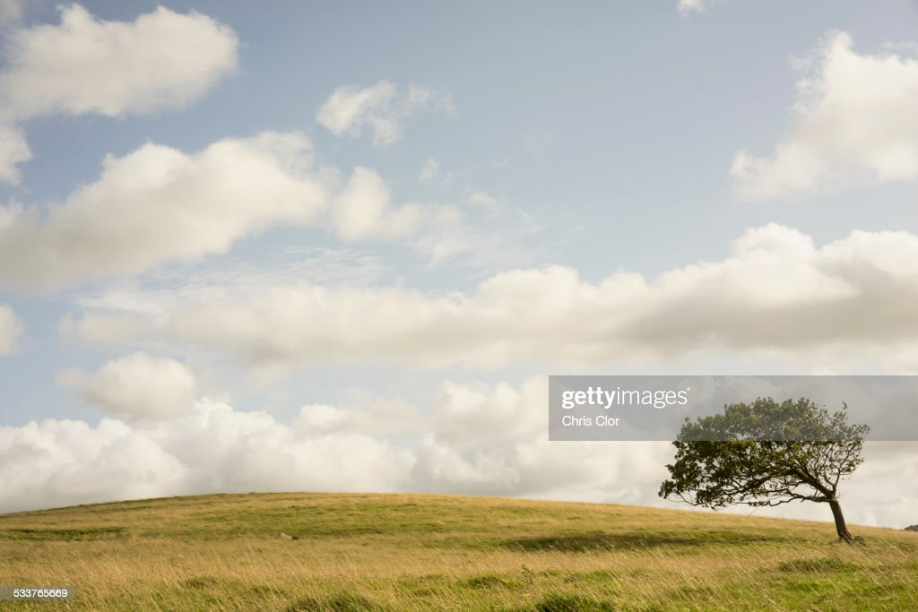 Tree growing in rural field : Foto stock