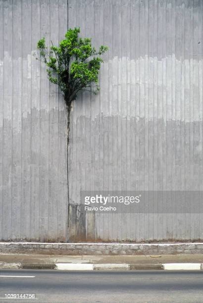 a tree growing in the gap between two concrete walls - hope concept stock photos and pictures