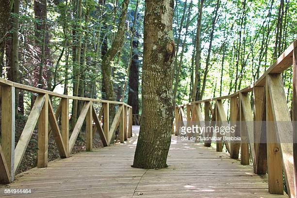 A tree growing in the middle of a wooden path.