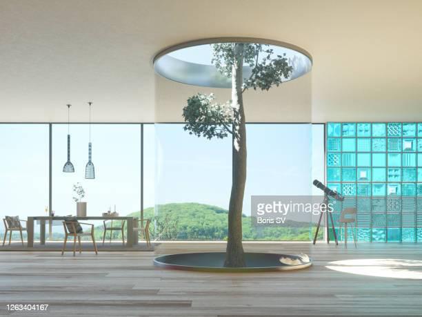 tree growing inside the house - umweltschutz stock-fotos und bilder