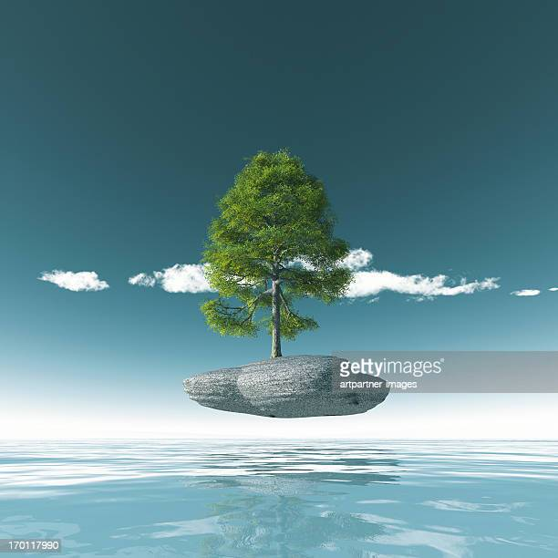 A Tree growing on a rock above the sea