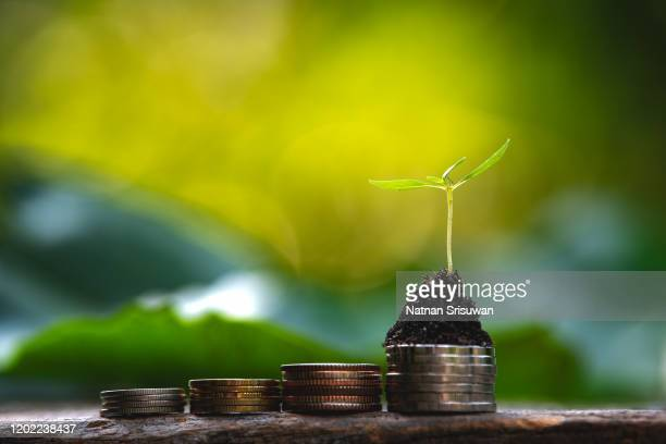 tree growing on coins. - responsibility stock pictures, royalty-free photos & images
