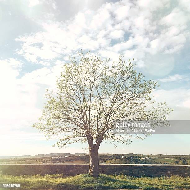 Tree Growing On Grassy Field Against Sky
