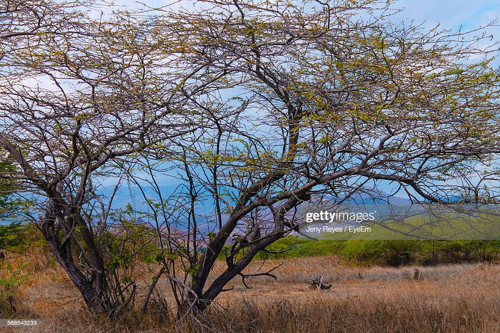 Tree Growing On Grassy Field Against Sky : Stock Photo
